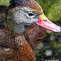 Whistling Duck by Michael Kennedy