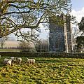 Whitcombe Church by Sebastian Wasek