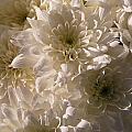 White And Pure by Riad Belhimer