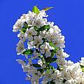 White And Wonderful by Elizabeth Dow