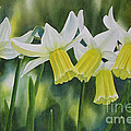 White And Yellow Daffodils by Sharon Freeman