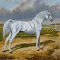White Arabian Stallion by Irek Szelag