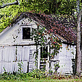 White Barn In Autumn by Betty Denise