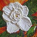 White Begonia by Paris Wyatt Llanso