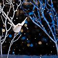 White Bird In Winter by U Schade