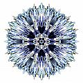 Blue Globe Thistle I Flower Mandala White by David J Bookbinder