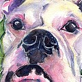 White Boxer by Maria's Watercolor