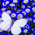 White Butterfly In Blue Flowers by Garry Gay