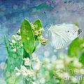 White Butterfly by Susan  Turner