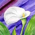 White Calla Lily Purple Mood by Annie Troe