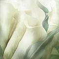 White Calla Moods by Carol Cavalaris