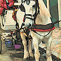 White Cart Horse by Alice Gipson
