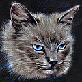 White Cat Portrait by Daliana Pacuraru