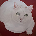White Cat by Zina Stromberg