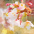 White Cherry Blossoms Digital Watercolor Painting 4 by Beverly Claire Kaiya