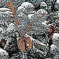 White Christmas by Bob Hislop