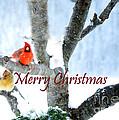 White Christmas by Nava Thompson