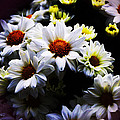 White Chrysanthemum by Music of the Heart