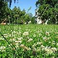 White Clover Field And The Playground by Ausra Huntington nee Paulauskaite