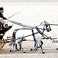 White Coach Horses by Alice Gipson