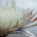 White Colors 2 by Kathy Williams-Walkup