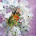 White Crape Myrtle by Judi Bagwell