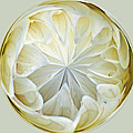 White Dahlia Orb by Tikvah's Hope