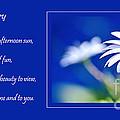 White Daisy by Kaye Menner