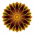 Deep Orange Marigold V Flower Mandala White by David J Bookbinder