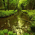 White Deer Creek by Cody Arnold
