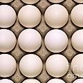 White Eggs In Carton by Jim Corwin