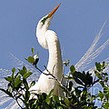 White Egret In Spring by Lydia Holly