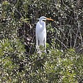 White Egret In The Swamp by Christiane Schulze Art And Photography