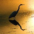 White Egret Reflection by Nancy Spirakus