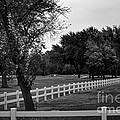 White Fence On The Wooded Green by Frank J Casella