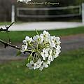 White Florescence by Sonali Gangane