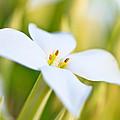 White Flower 2 by Ben Graham