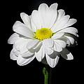 White Flower by Gennadiy Golovskoy