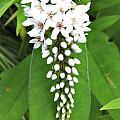 White Flower by Jennifer Evans