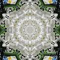 White Flower by Lena Photo Art