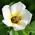 White Flower- Nectar by Darla Wood