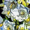 White Flower Spendor by Chris McKenna