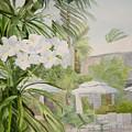 White Flowers Aruba by Katherine  Berlin