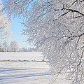 White Frost by Conny Sjostrom