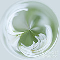 White Green And Round by Anne Gilbert
