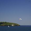 White Gull by Simon Kennedy