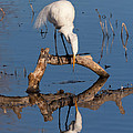 White Heron In The Looking Glass by Kathleen Bishop