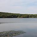 White Heron Lake Poconos Pa by John Telfer