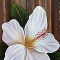 White Hibiscus by Gayle Utter