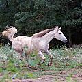 White Horse by Annette Persinger